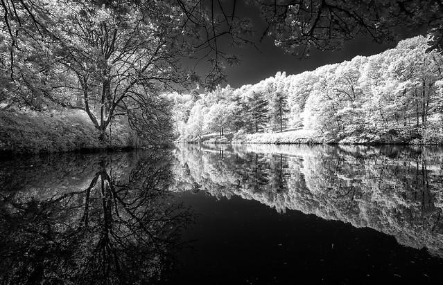Winkworth Arboretum., Fujifilm X-Pro1, XF14mmF2.8 R
