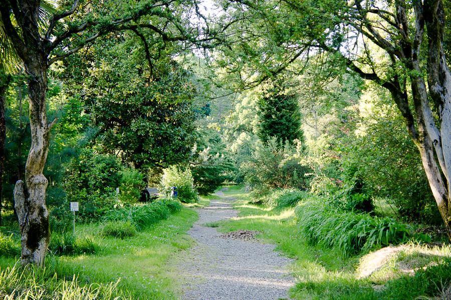 Сухумский ботанический сад. Абхазия - авторские путешествия Kartazon Dream