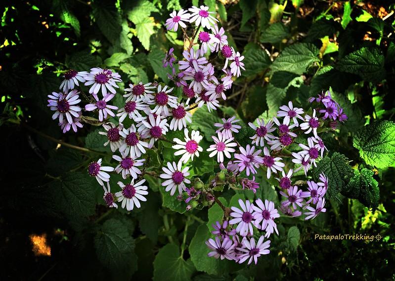 10 Flor de mayo