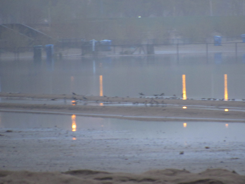 Blurry Shorebirds