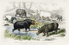 Hippopotamus, Indian Rhinoceros, Muchoco, White Rhinoceros, Two Horned African Rhinoceros, and Malay Tapir from A history of the earth and animated nature (1820) by Oliver Goldsmith (1730-1774). Digitally enhanced from our own original edition.