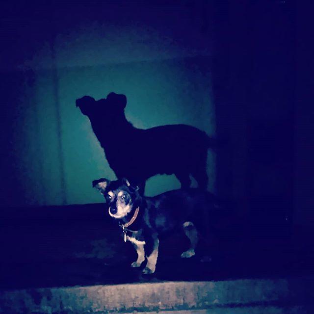С ночной прогулки вместе с маленькой чёрной собачкой Тошей возвращается большая чёрная собака-тень.