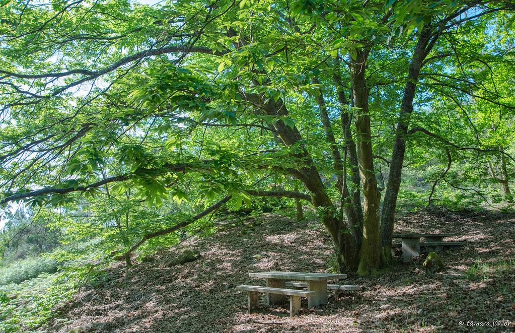15.- Rota do Monte Aloia (121)
