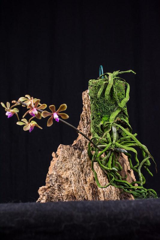 Orchideen-Neuzugang 2 - Seite 3 40745775000_f2e3e5f030_c