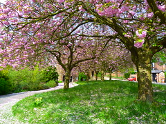Fletcher Moss Park