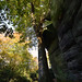Within the High rocks (Royal Tunbridge Wells, Kent)  -  (Selected by GETTY IMAGES)