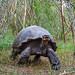 Galapagos Giant Tortoise-3906 by kasiahalka (Kasia Halka)
