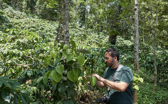 Julian checks out the pepper vine