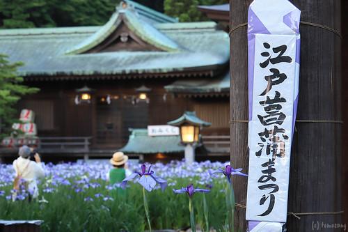 Japanese Iris Flower Festival 2018