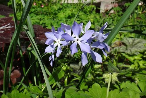 Цветение в начале июня