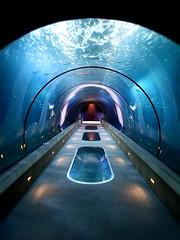 through the aquarium