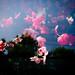 Plastic Sakura by Calinore