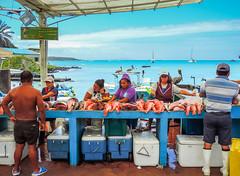 Fish market; Puerto Ayora, Santa Cruz Island