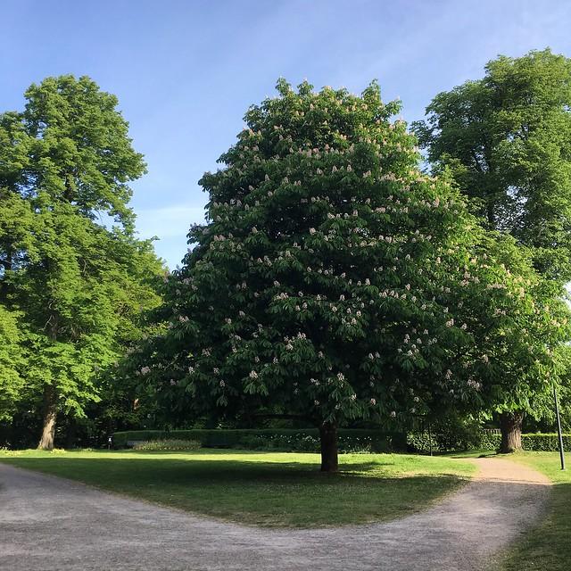 monday, chestnut, öresundsparken, helsingborg