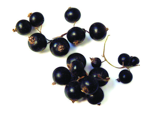 Cassis (Black Currants)