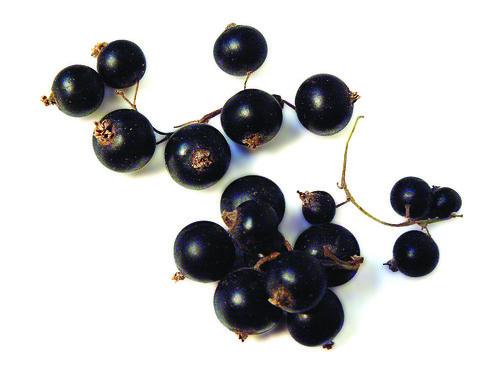 Cassis (Black Currants)