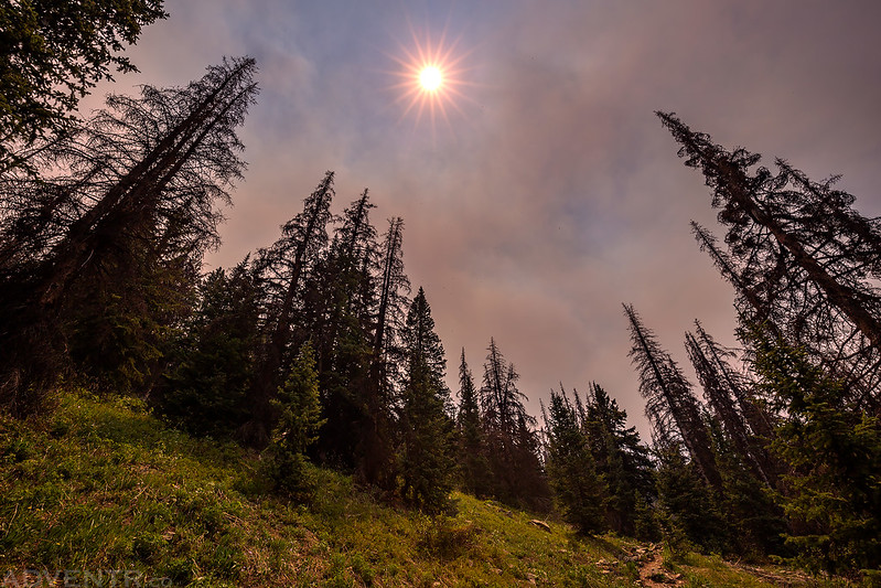Smoky Sunstar