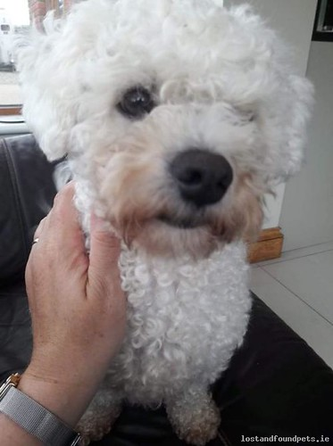 Sun, Jun 17th, 2018 Lost Male Dog - Belcotton, Termonfeckin, Louth