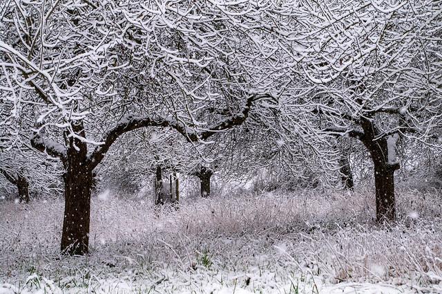 Wintertag Schneefall, Pentax K-7, smc PENTAX-DA 18-55mm F3.5-5.6 AL WR
