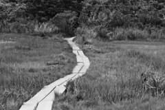 20180610 - Wing Island Hike