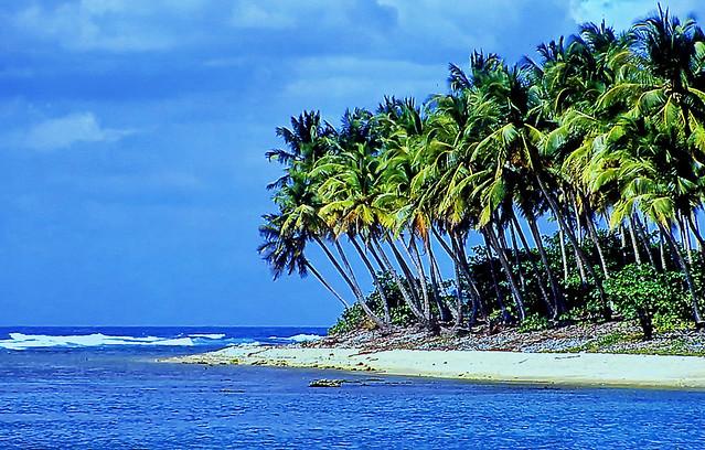 Sunshine Reggae - Tropical delights