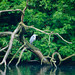 Watchful heron on fallen tree, West Park