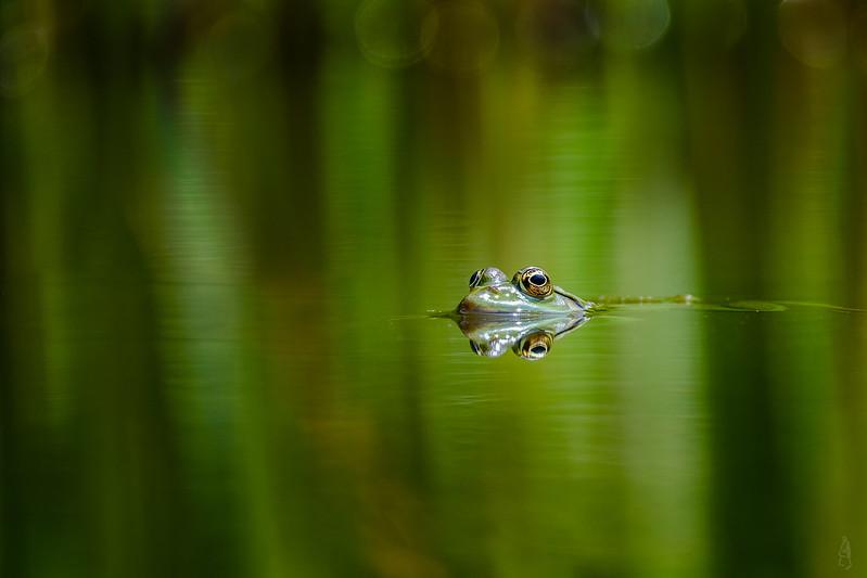 Frogger 2018