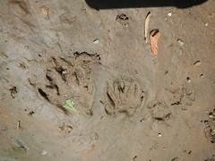 DSCN4077 No Wpt Animal Tracks
