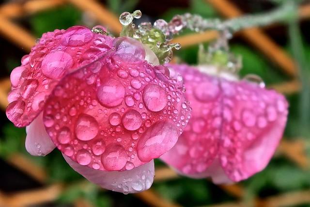 proof of rain