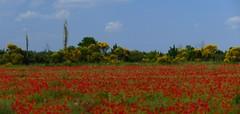 Gallician (Chemin du Moulin à huile des Bouvets, Petite Camargue, Gard)