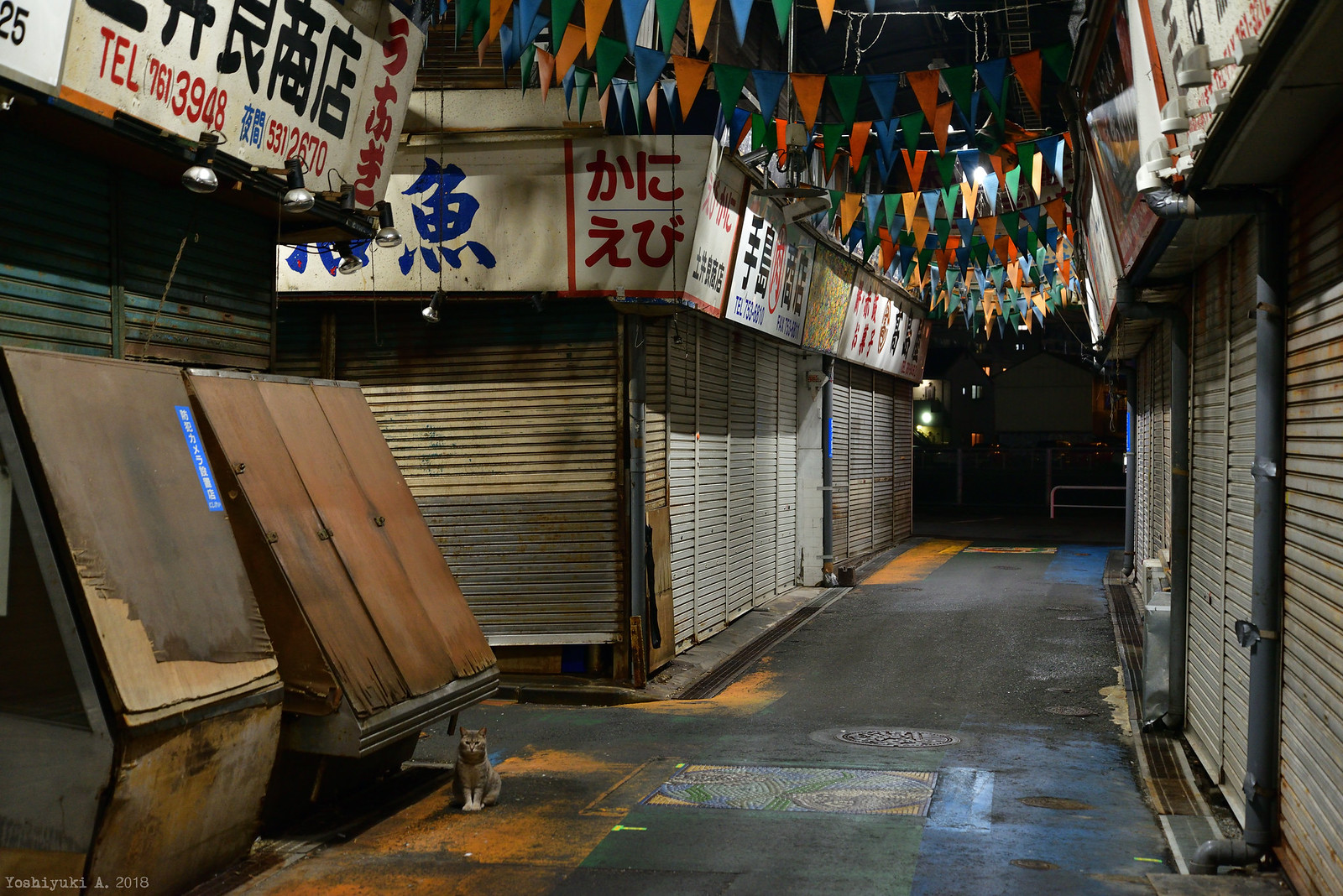 柳橋連合市場 DS7_3385_090