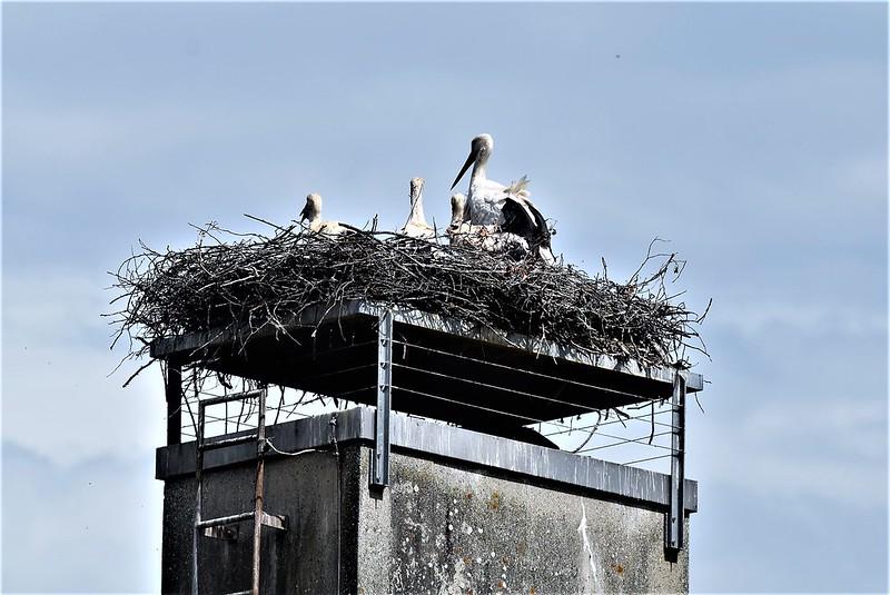 Storks 10.06 (4)