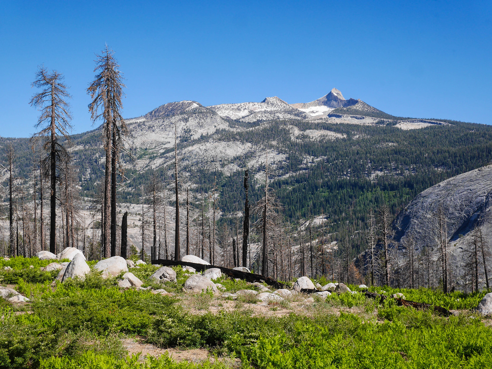 Mount Clark from the burn area above Merced Canyon