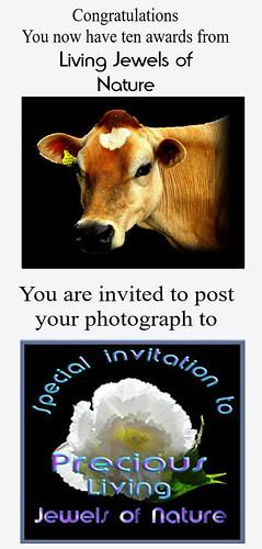 prec invite copy