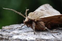 Moth Close Up