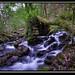 Fragas do rio Eume-Eume River Natural Park. by luis-lusco