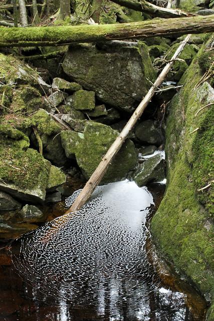 Boreal Stream near Lonesome Lake, NH