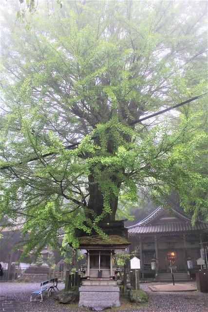 iwamadera-insta014