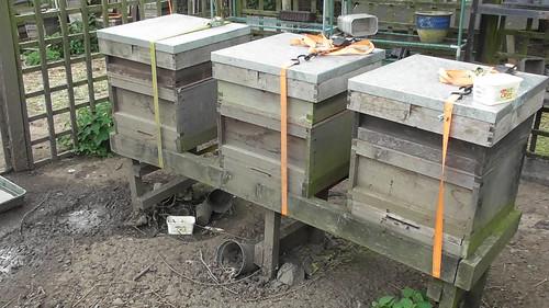 bee hives June 18 1