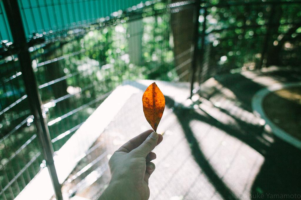 葉っぱもらった