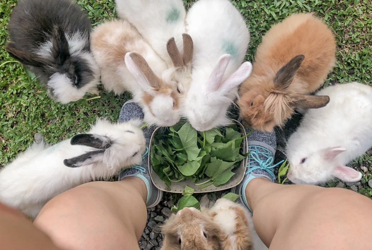 蕭家大院兔子寵物餐廳-16