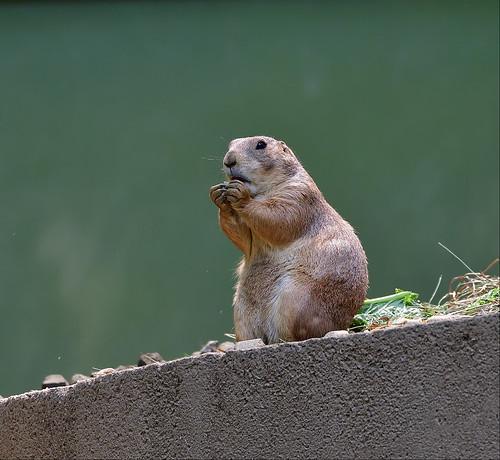 DSC_6979_00001-----------------Beardsley Zoo