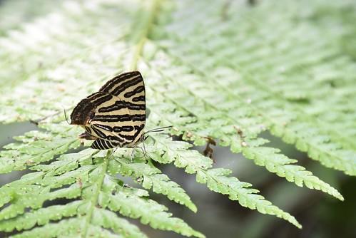 天溪園-蝴蝶