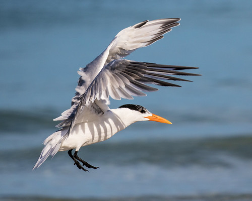outdoor seaside shore sea sky water nature wildlife 7dm2 ocean canon florida bird bif flight