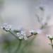 Unknown Umbellier Plant by Anne Worner