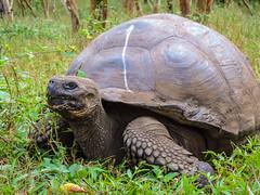 El Chato Tortoise Reserve; Santa Cruz Island