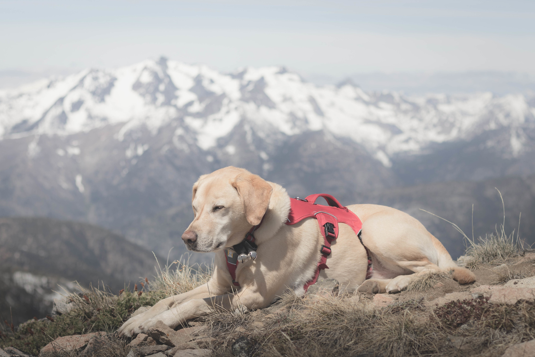 Summit dogs on McLeod Mountain