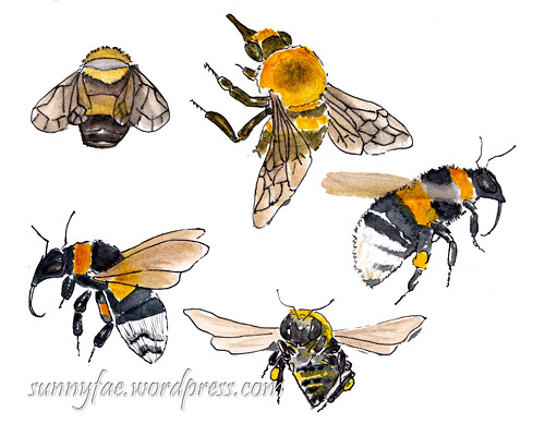 sketches of bees 2