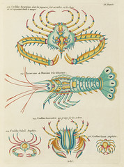 Colourful and surreal illustrations of fishes and  found in the Indian and Pacific Oceans by Louis Renard (1678 -1746) from Histoire naturelle des plus rares curiositez de la mer des Indes (1754).
