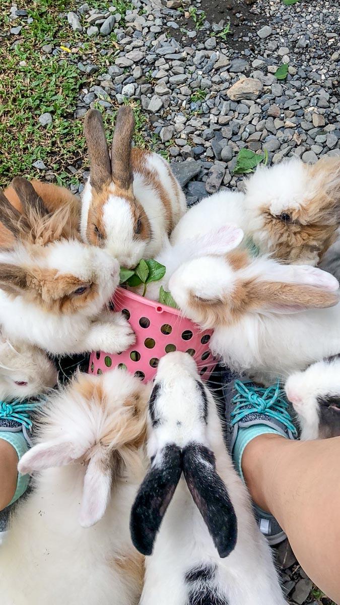 蕭家大院兔子寵物餐廳-10
